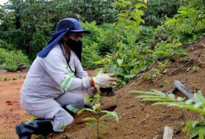 Em Juruti, reabilitação de áreas mineradas contribui para geração de renda de agricultores